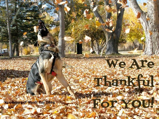 Tripawds Thanksgiving Gratitude