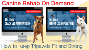 Tripawds home exercise program