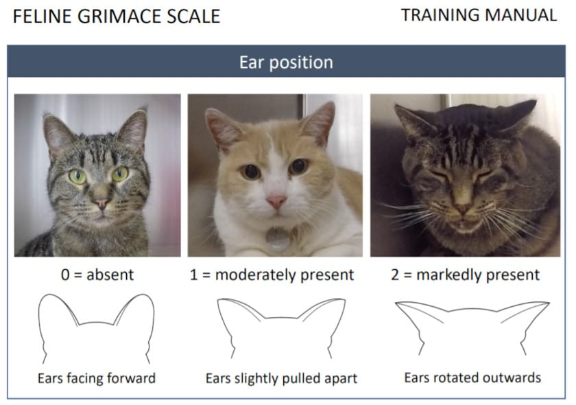 how cats show pain