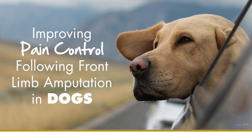 amputation pain control in dogs