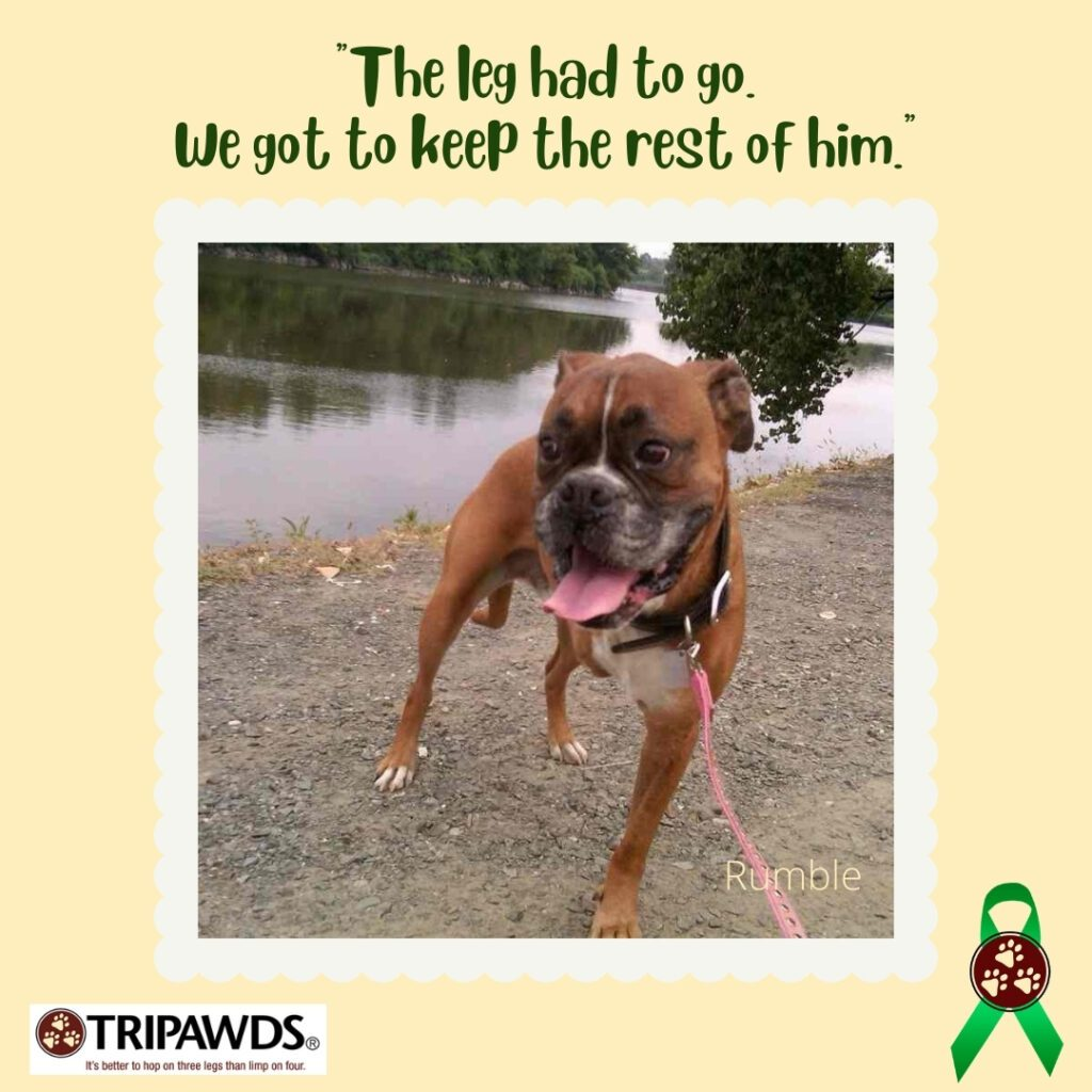 funny things people say about Tripawd pets