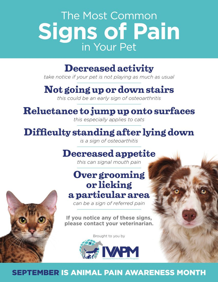 Tripawd Pain Signs