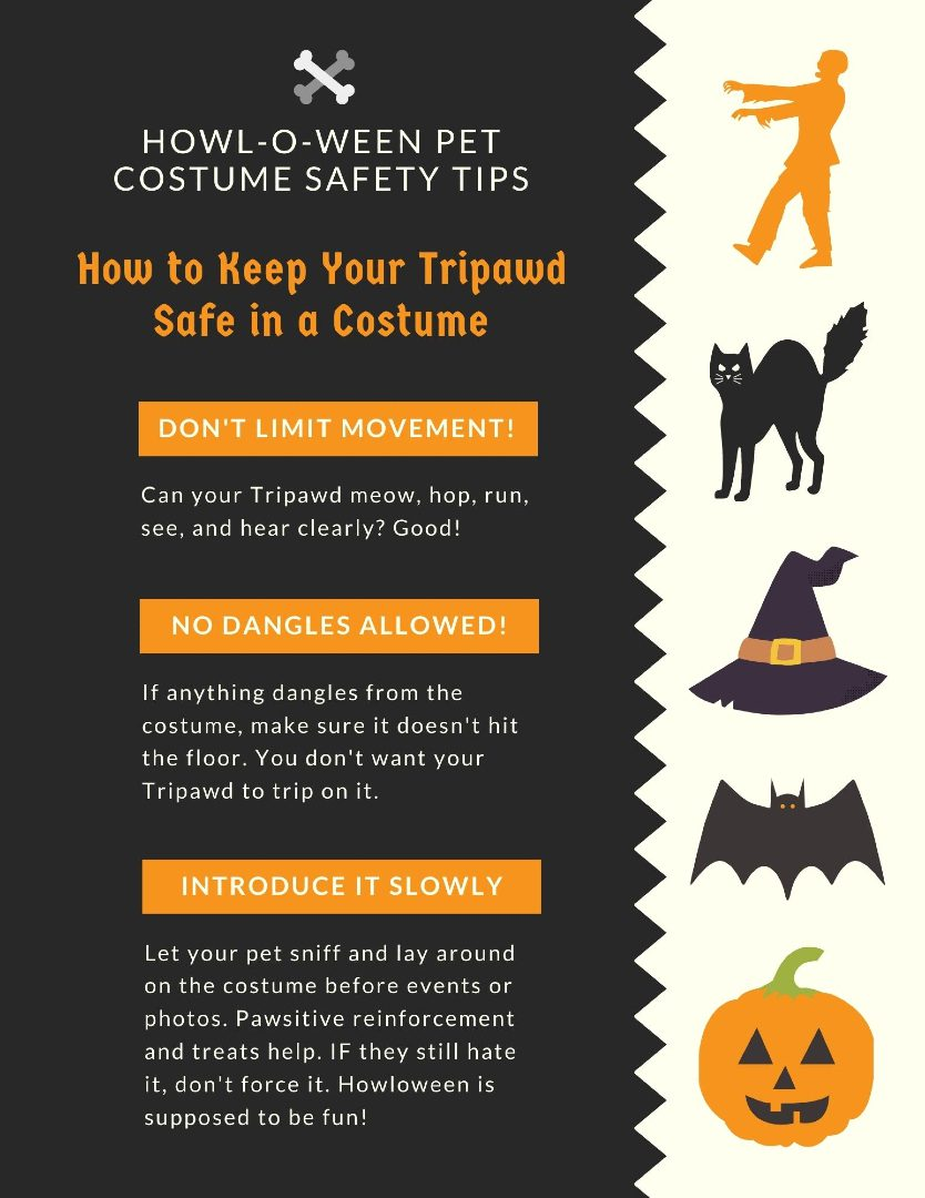Tripawd Halloween Safety Tips