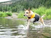 Testing the K9 Float Coat at Lake San Cristobal