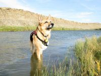 Jerry enjoys the S. Platte river near Sinclair, WY