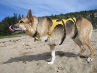 Ready for the Frisbee at Sand Beach in Bar Harbor, Maine