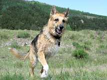 Running on three legs to the Vickers Ranch Pond