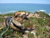 Overlooking the Pacific at Fort Funston, San Francisco
