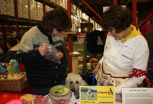 Mission 4 Hope Helps Three Legged Dogs with Outreach ...