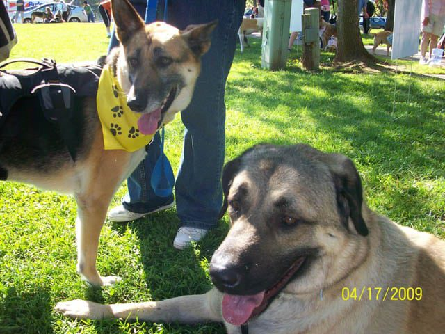 Tripod Cancer Heroes Cemil and Montana
