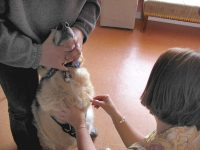 Canine Cancer Treatment Blood Draw at Vet Cancer Care Clinic
