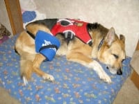 Hot Cold Pain Relief Pack Helps Torn ACL on Three Legged Dog