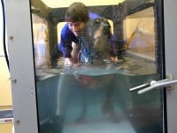 Hydrotherapy for Three Legged Rottweiler Max at Santa Fe vet Cancer Clinic