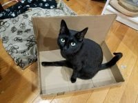 DIY litterbox for Tripawd cats
