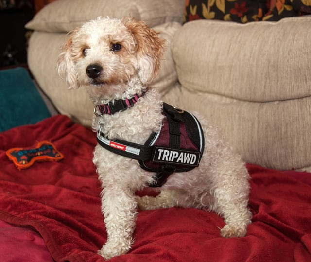 Cassidy Models Tripawd Convert Harness