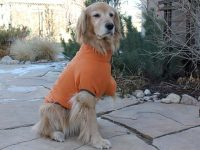 Shasta keeps warm with Ruff Wear Clmate Changer Dog Sweater