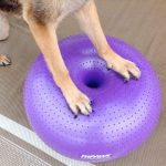 FitPAWS Trax Donut Dog Exercise Ball