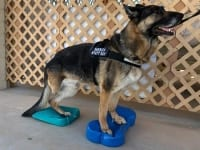 FitPAWS Balance Ramp and FitBONE