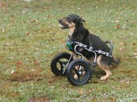 EddiesWheels Forelimb Amputee Dog Wheelchair Front Wheel Cart