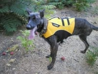 Rile Ray in Ruff Wear Float Coat Life Jacket for Dogs