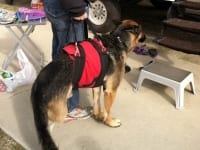 AST Custom Pet Support Suit Best Harness for Recovery