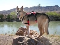New Webmaster Harness from Ruffwear