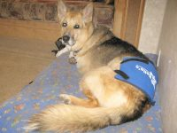 Bellas Pain Relief Pack Relieves Arthritis in Dogs
