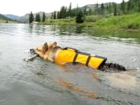 K9 Float Coat Dog Life Preserver helps three legged dogs swim