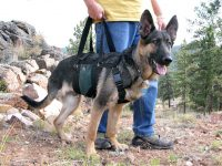 AST Get A Grip Harness Help Support Large Dogs