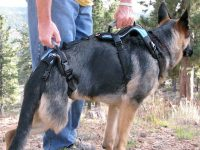Help Em Up Harness Helps rear leg Tripawds