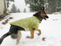 Ruff Wear Climate Change Keeps Dogs Warm in Snow