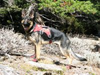 Ruff Wear Web Master Harness and Grip Trex Boots