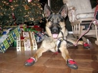 Ruff Wear Grip Trex Dog Boots Provide Traction on Slippery Floors