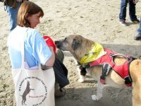 Max in Ruff Wear Harness, Susan with Tripawds Bag