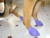 Pawz reusable disposable non-skid dog boots