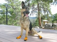 Power Paws Traction Socks for Dogs Slippery Floors Help