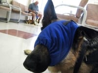 Calming Cap Keeps Wyatt Calm at the Vet