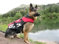Wyatt Wears Ezy Dog Lofe Vest for Dogs