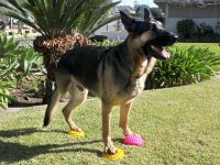 FitPaws Paw Pods Dog Balance Exercise Gear