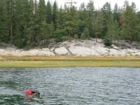 Wyatt swims Shaver Lake in Ruffwear Float Coat