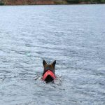 Wyatt swims Crystal Lake in Ruffwear Float Coat