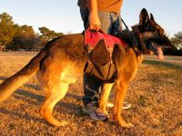 Ruffwear Web Master Plus Brush Guard Harness