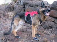 Ruffwear Grip Trex Dog Boots and Web Master Plus Brush Guard Harness
