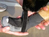 How to put on Ruffwear Grip Trex dog boots