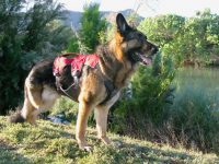 Ruffwear Web Master Plus Brush Guard