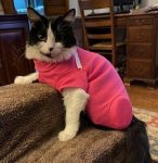 Cat Amputation Recovery Suit
