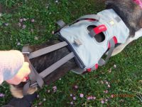 Doubleback Hip Lift Harness for Dogs