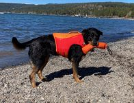 Sadie Rottweiler in Float Coat