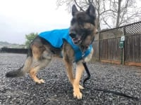 Sunshower Doggy Rain Jacket