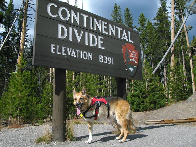 Three legged dog Jerry at the Continental Divide, Colorado